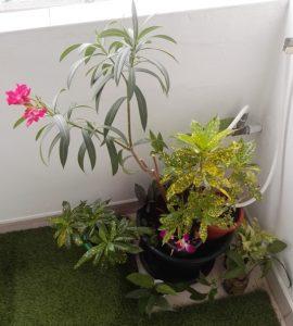 цветок из джунглей