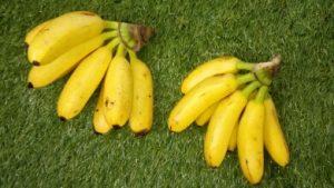 Как лучше хранить бананы