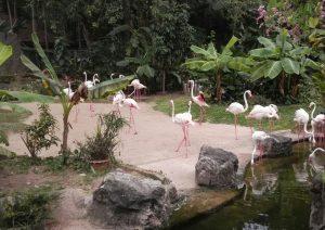 Где посмотреть панд фламинго