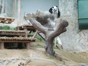 где посмотреть панд